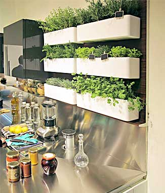 Kitchen Herb Wall Garden
